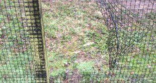 Opengebroken gaas bij inbraak Veldhoven Zoo